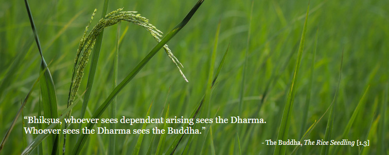 """Bhikṣus, whoever sees dependent arising sees the Dharma.<br/>Whoever sees the Dharma sees the Buddha.""- The Buddha, The Rice Seedling [1.3]"